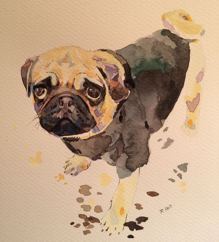 Drawn pug watercolor 17 the lovers The the