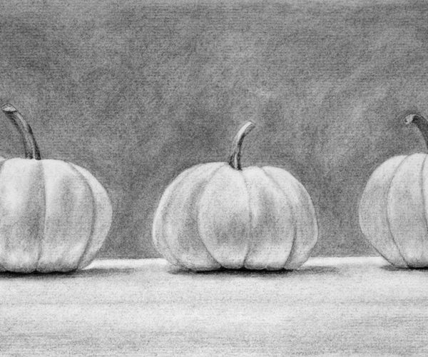 Drawn pumpkin charcoal Charcoal Christina Pumpkin Steward Art