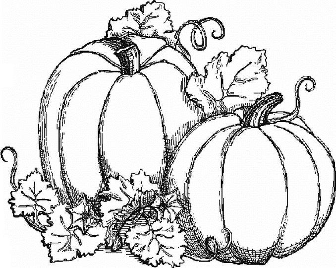 Drawn pumpkin color For  Result pictures Pumpkin