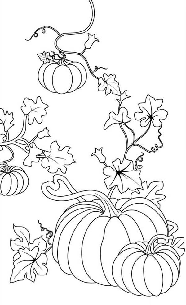 Drawn pumpkin color Coloring Pumpkins Color pumpkin Pumpkins