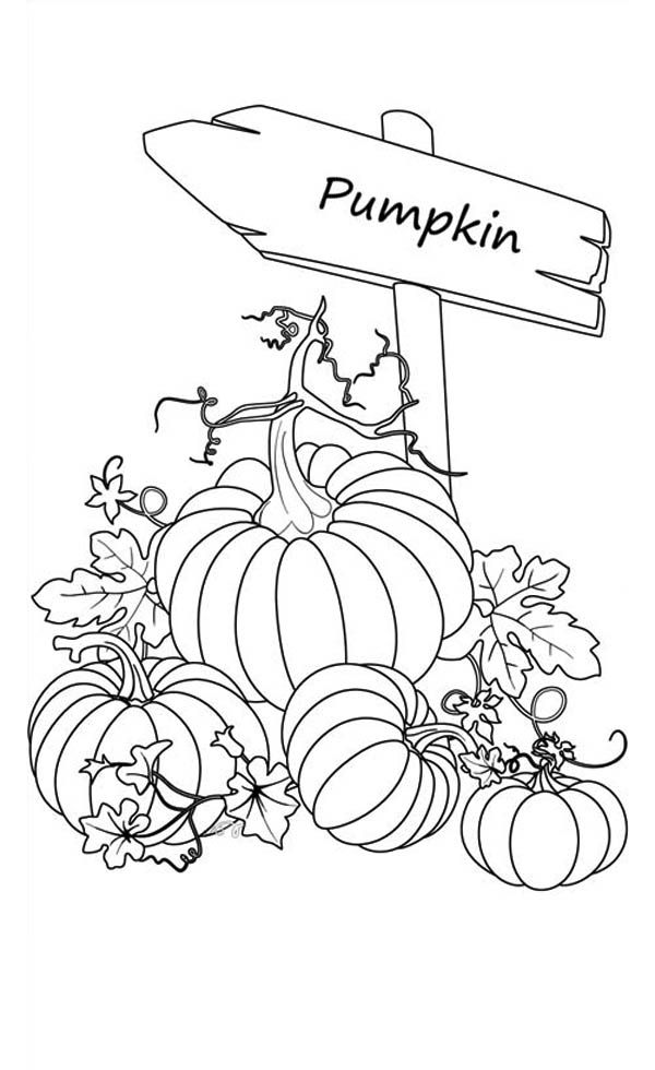 Drawn pumpkin color Of Sign Coloring 25+ printable