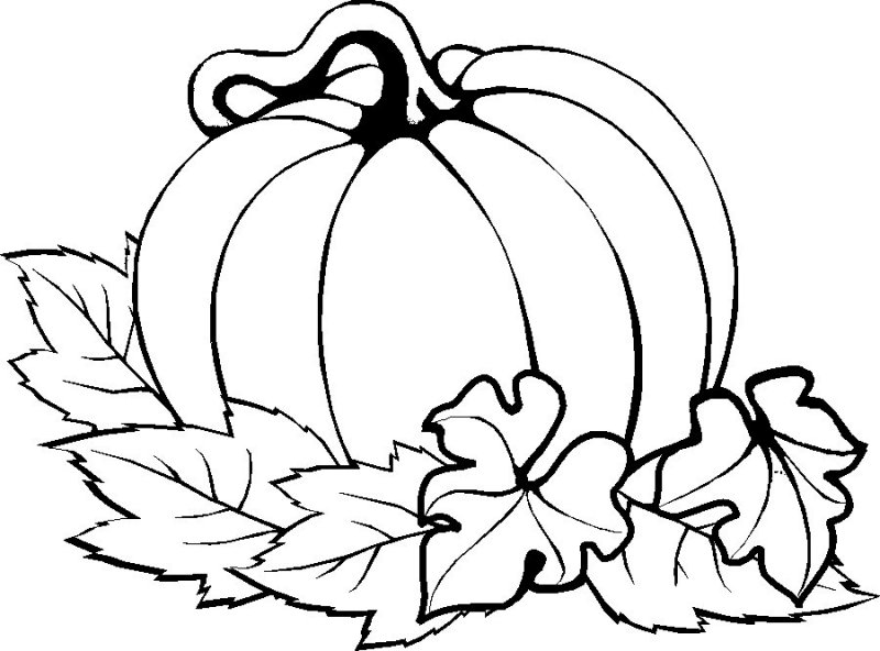 Drawn pumpkin color for kid Thanksgiving Printables Easy Embroidery Printables
