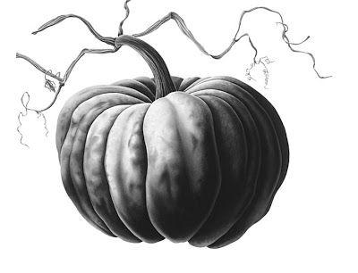 Drawn pumpkin pencil Graphite Blaxill on by ·