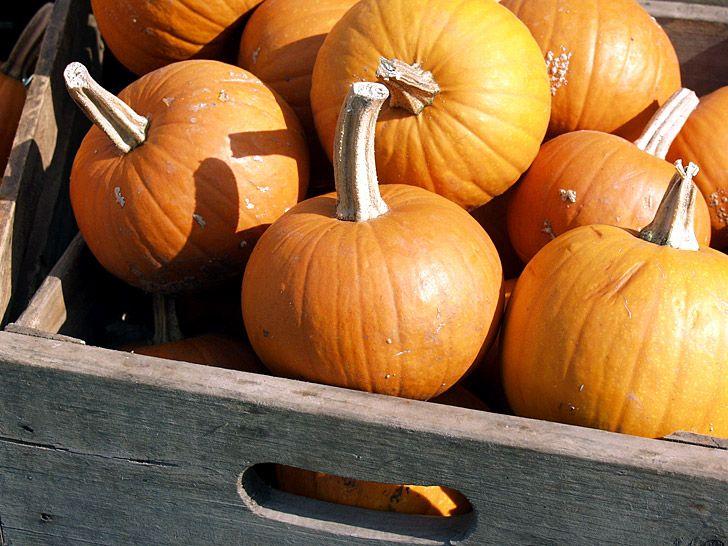 Drawn pumpkin plain ½ of Pinterest tablespoons cup