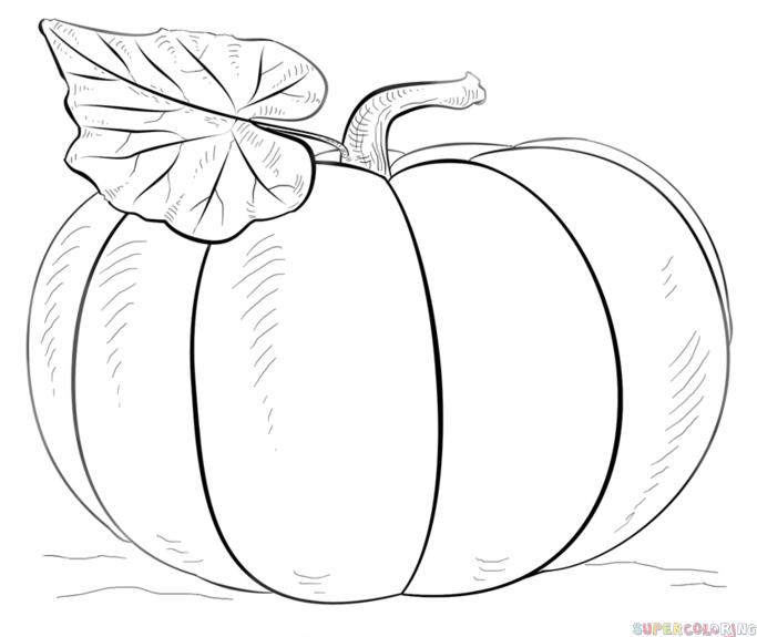 Drawn pumpkin pumkin How draw step pumpkin tutorials