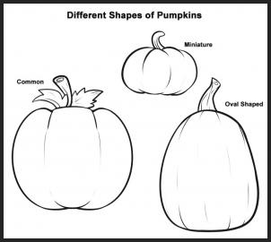 Drawn pumpkin pumkin Or all either This just