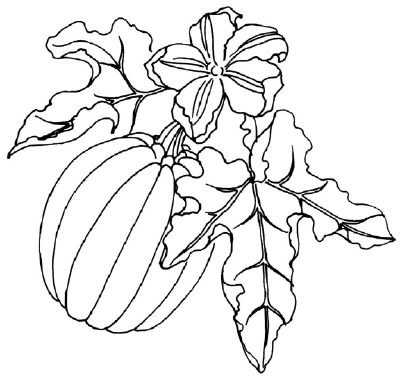 Drawn pumpkin pumpkin flower A a How Draw How