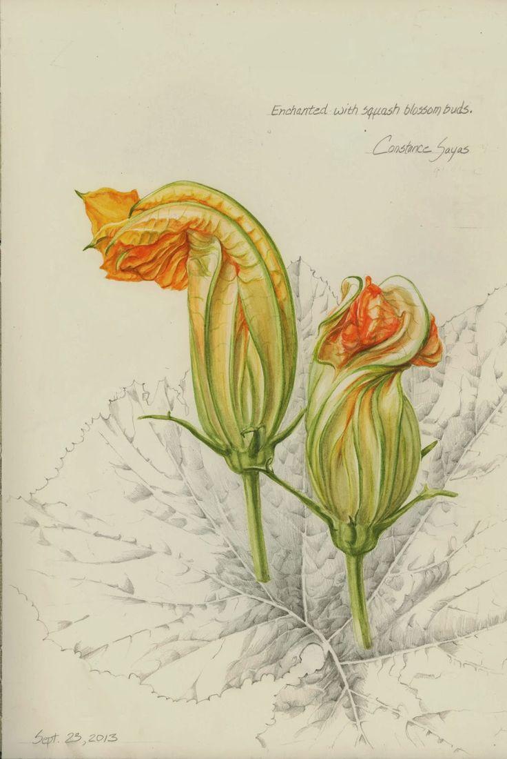 Drawn pumpkin pumpkin flower About 246 country Pinterest botanical