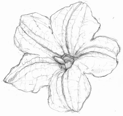 Drawn pumpkin pumpkin flower Cute flower progress bees in