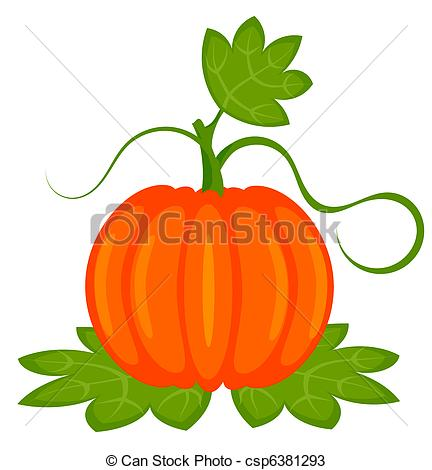 Drawn pumpkin pumpkin plant Of pumpkin Vectors Pumpkin plant
