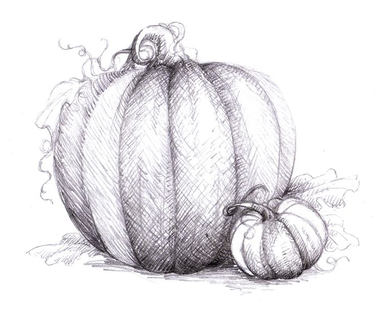 Drawn pumpkin pumpkin plant Http://3 · for Best Google