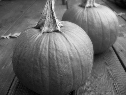 Drawn pumpkin shading MARKS) DRAW AND CREATE SHADE