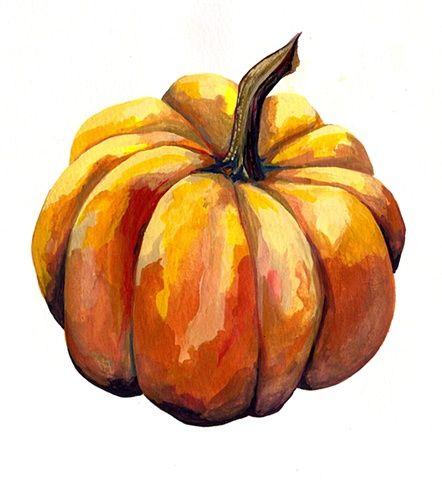 Drawn pumpkin squash Hohenadel Pumpkin 25+ on Angie