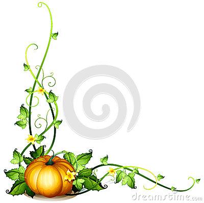 Drawn pumpkin vine Pumpkin Clipart pumpkin%20vine%20drawing Drawing Images