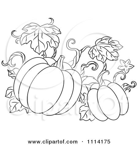 Drawn pumpkin vine Jpg vines with  of