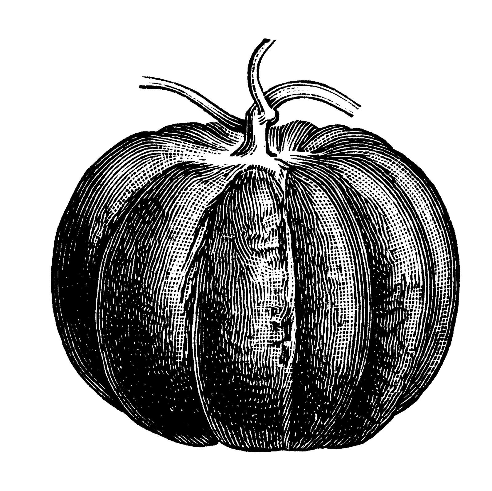 Drawn pumpkin vintage Clipart Vintage Jungle Borders Clipart