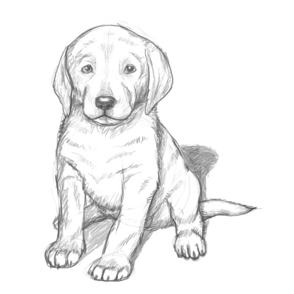 Drawn puppy Draw Drawing How puppy result!