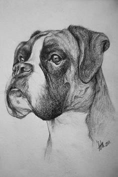 Drawn puppy boxer Drawing Photo Pet Adult drawing