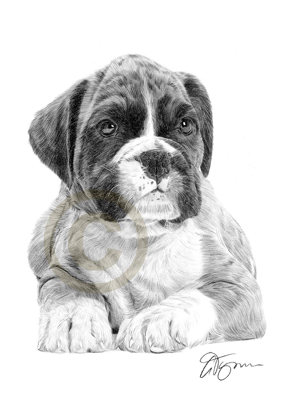 Drawn puppy boxer Photo#18 Dog drawing Boxer Pencil