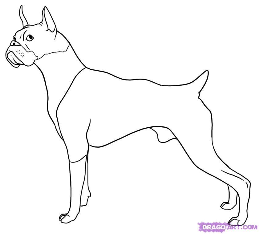 Drawn puppy boxer Boxer Drawing drawing Dog Boxer