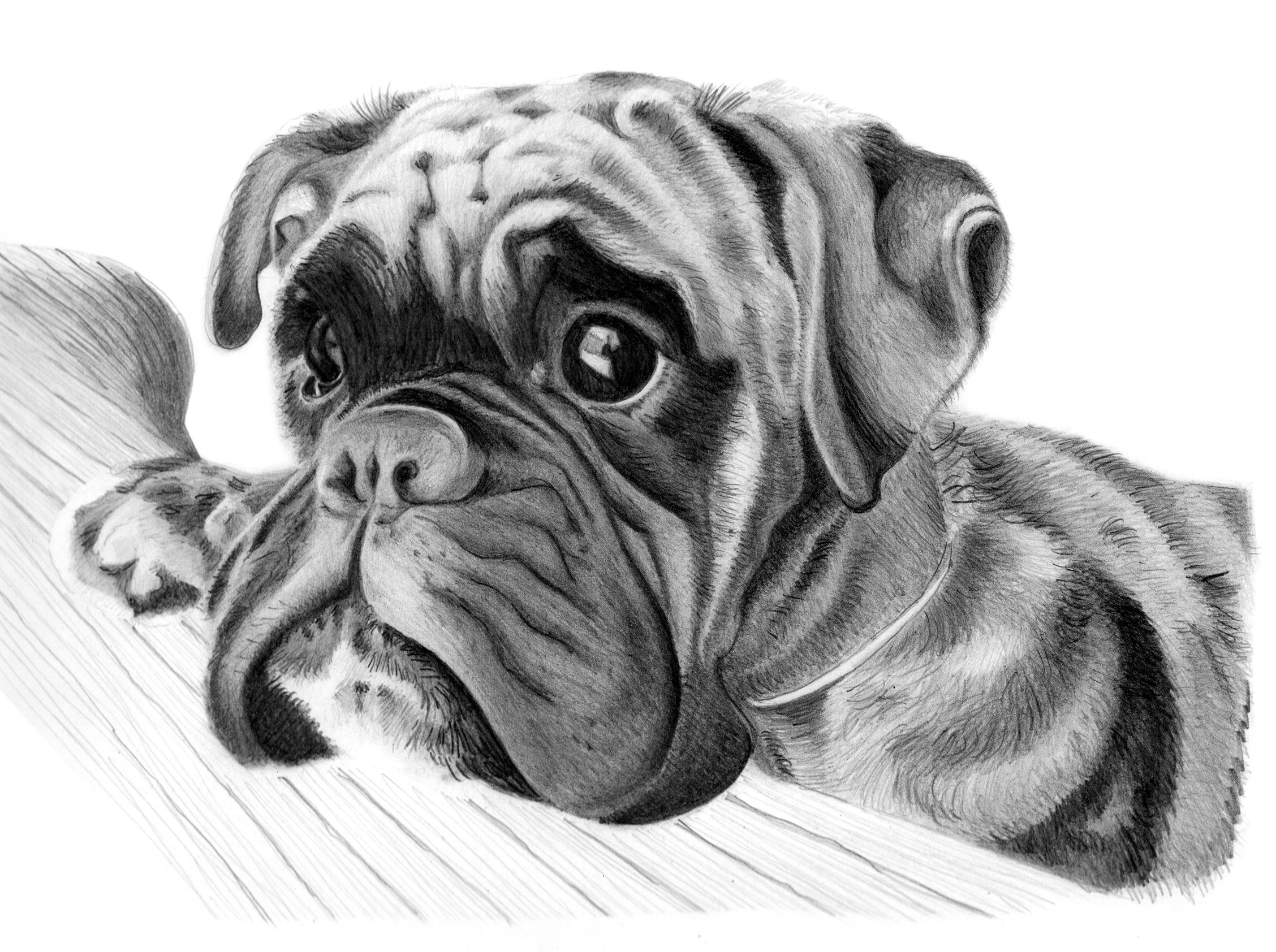 Drawn puppy boxer Animals co pets Of Dog