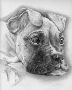 Drawn puppy boxer My dog  painting bambi