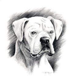 Drawn puppy boxer Rogers boxers Art BOXER Signed