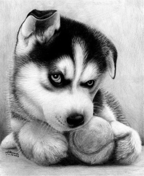 Drawn puppy charcoal Charcoal dog mania drawing paper