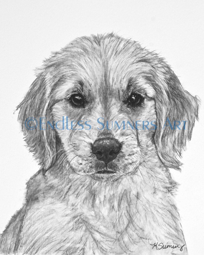 Drawn puppy charcoal To how is share Sumners