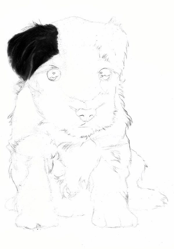 Drawn puppy charcoal To in How a work