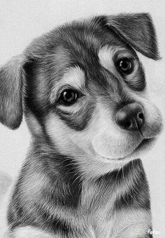 Drawn puppy charcoal More  Golden inspirations Retriever