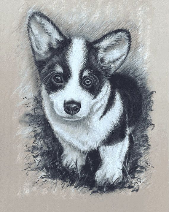 Drawn puppy charcoal Dogs Giclee about Original Puppy