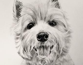 Drawn puppy charcoal Etsy portrait portrait 8x10 charcoal
