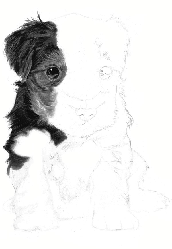Drawn puppy charcoal Render up and by this