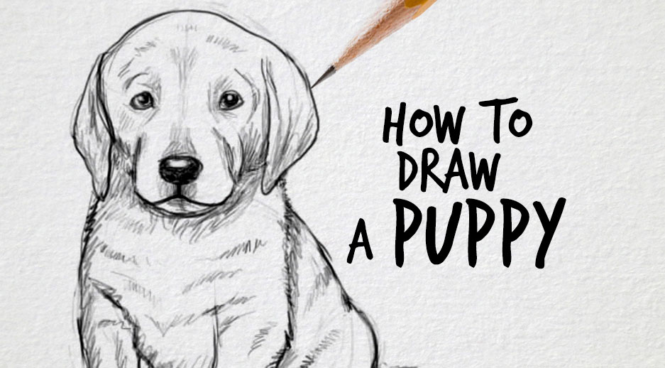Drawn puppy lab puppy Factory draw to puppy How