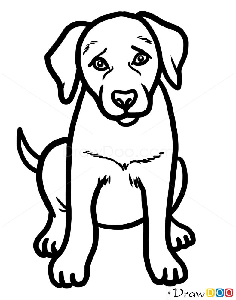 Drawn puppy lab puppy Lab Drawing  Puppy