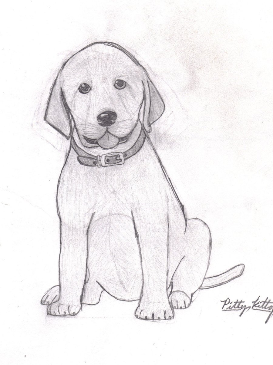 Drawn puppy lab puppy Labrador to puppy by drawing