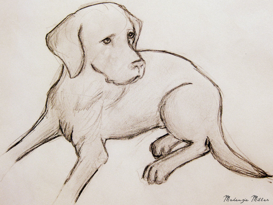 Drawn puppy lab puppy Labrador more this 137 Drawing
