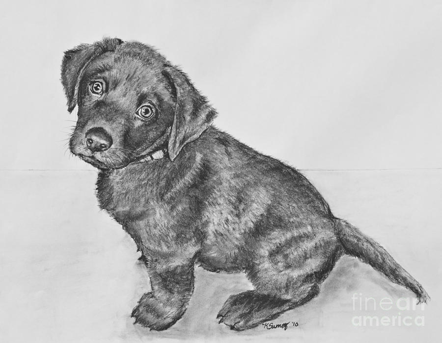 Drawn puppy lab puppy Artwork Lab Sumners Retriever Lab