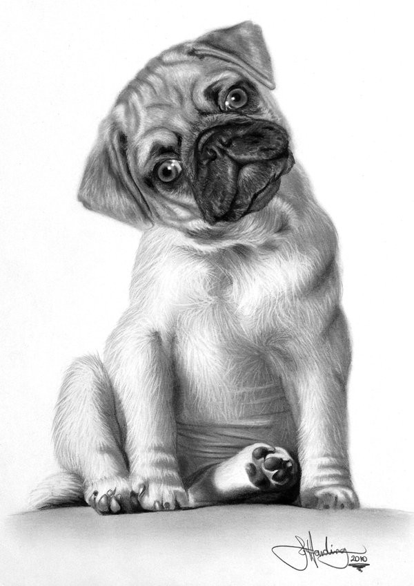 Drawn puppy medium level Search Google  botanicals drawing