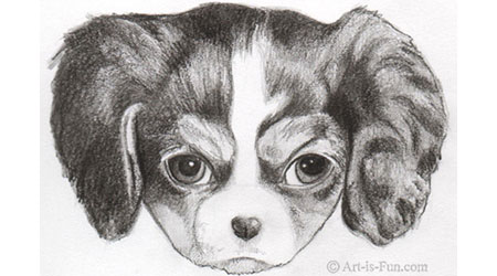 Drawn puppy medium level By Step Teach  Tutorials