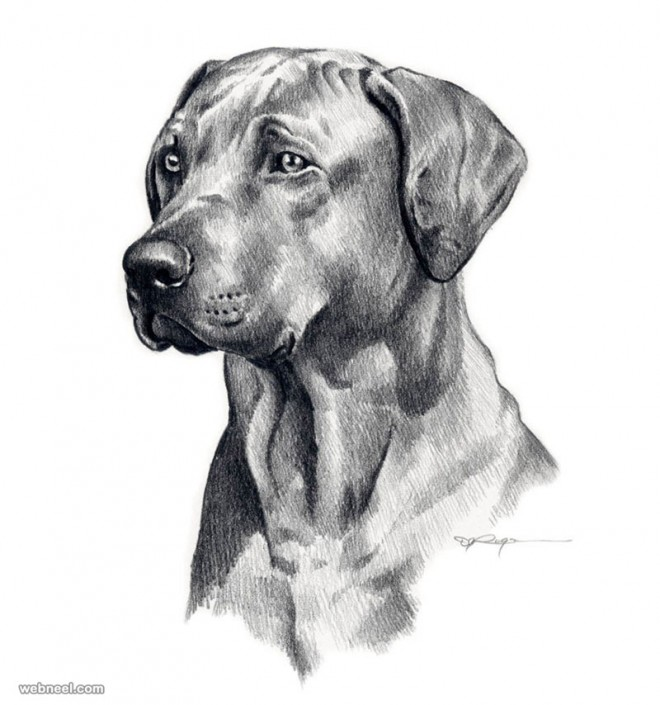 Drawn puppy pencil sketch Drawings rogers and dog drawing
