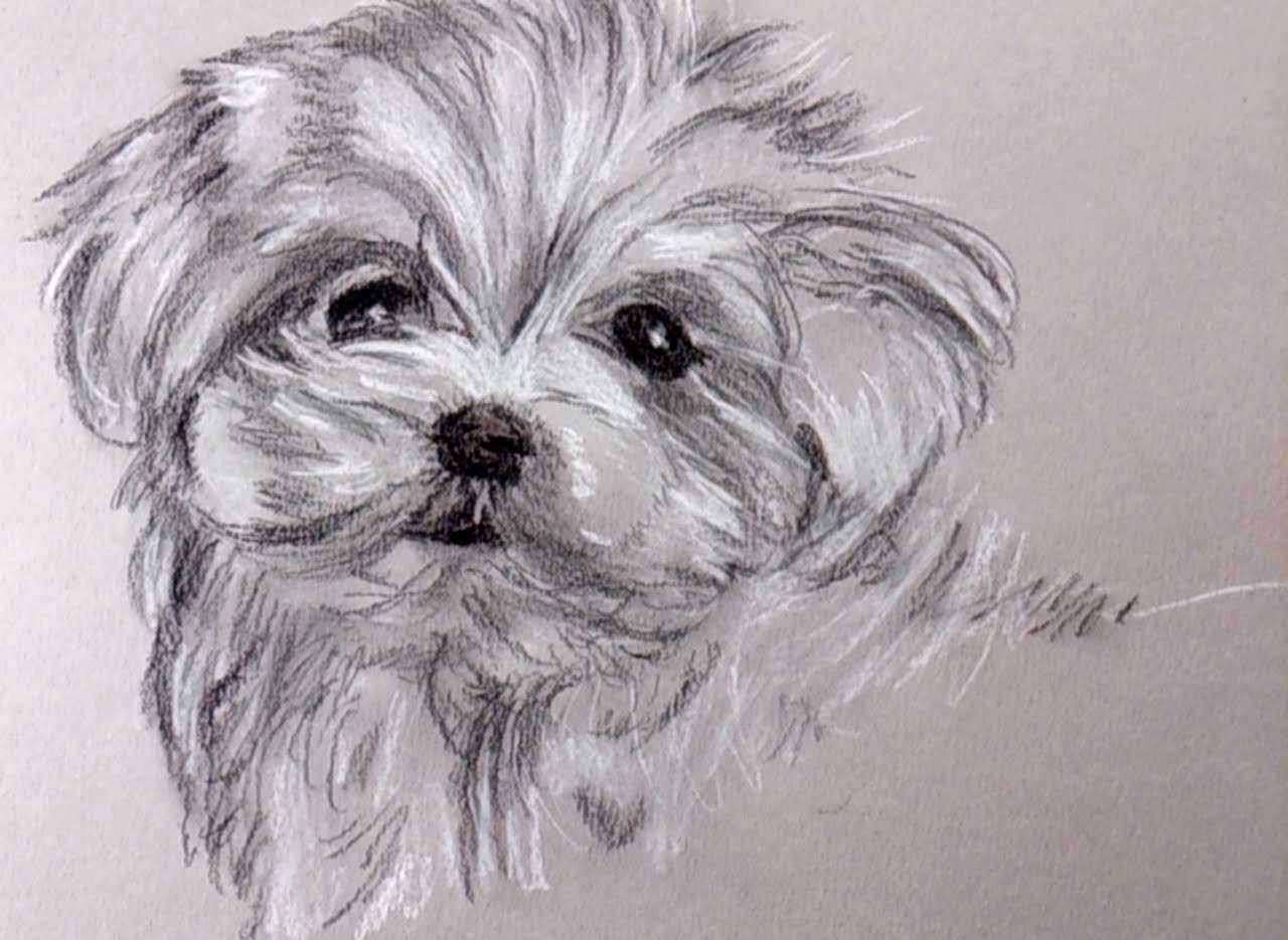 Drawn puppy pencil sketch Draw pencil with a charcoal
