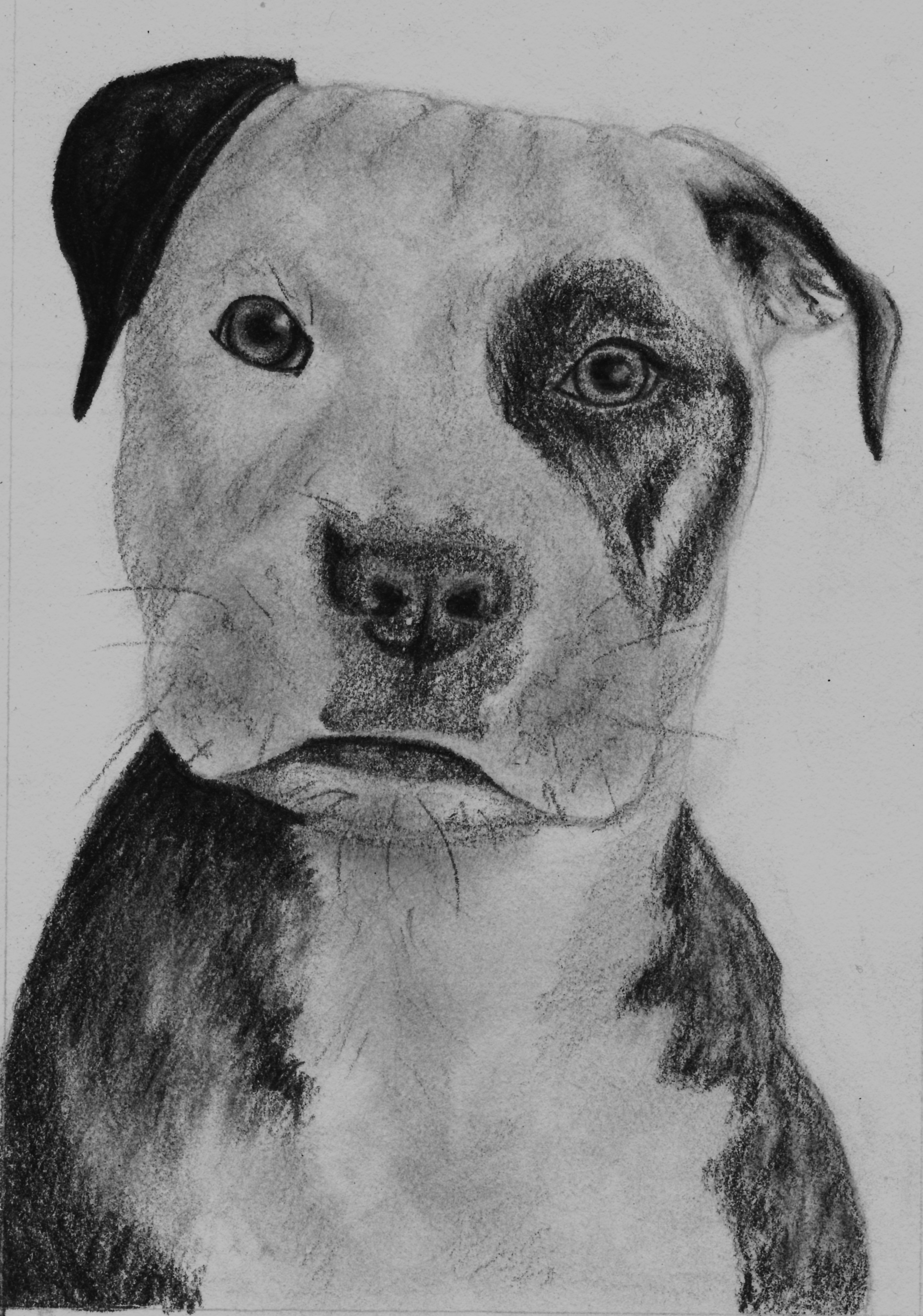 Drawn puppy pencil sketch Drawing Puppy by Pencil Drawing