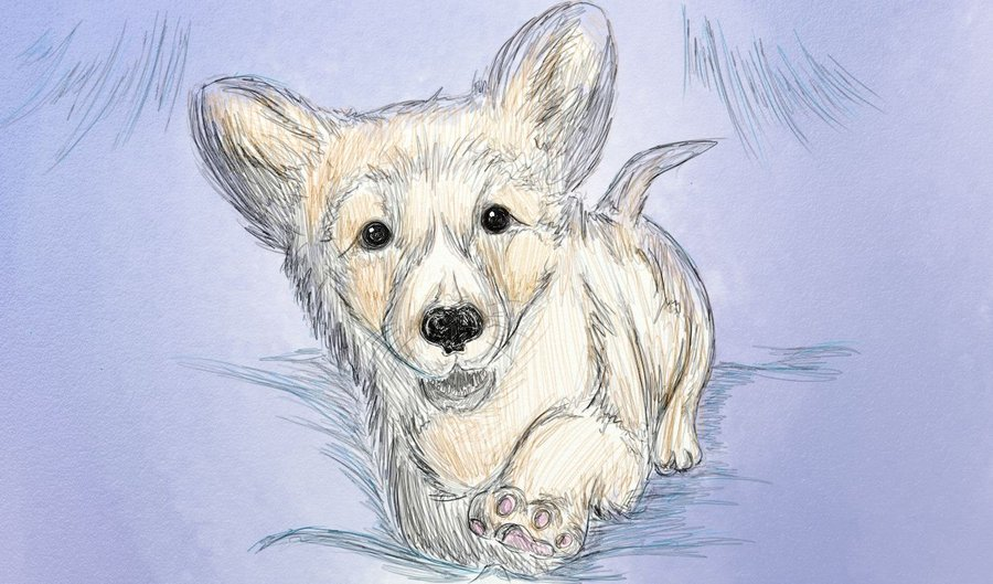 Drawn puppy realistic Puppy Drawing Realistic