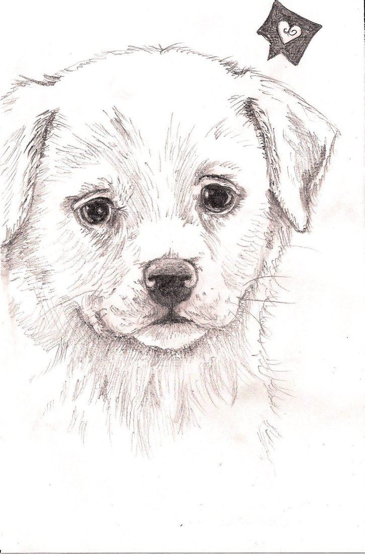 Drawn puppy realistic Draw photo#11 Dog Cute dog