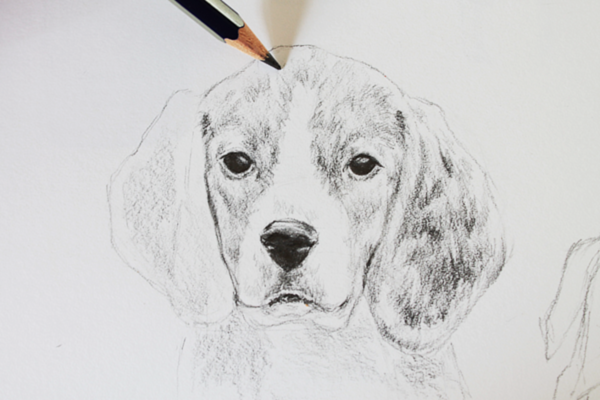 Drawn puppy realistic Tutorial to How Animals: Dog
