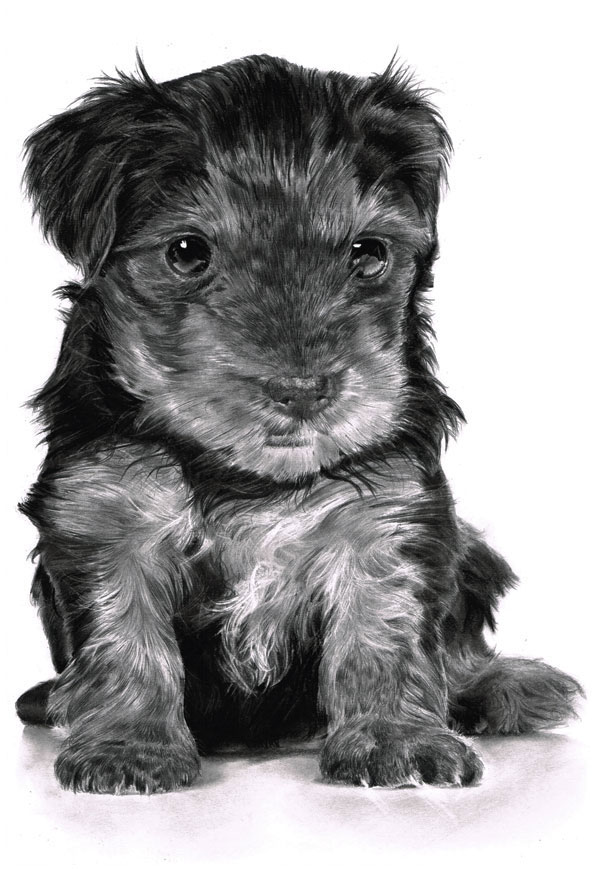 Drawn puppy realistic Image Render and and Draw
