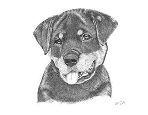 Drawn puppy rottweiler puppy Fine Rottweiler Art by Puppy