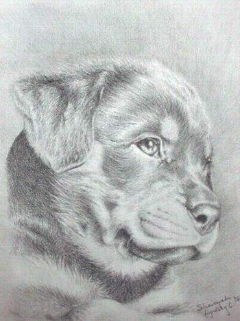Drawn puppy rottweiler puppy From of puppy shareyah drawing
